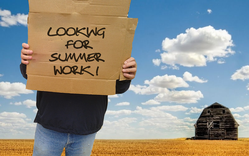 How to find a summer job Trinity News